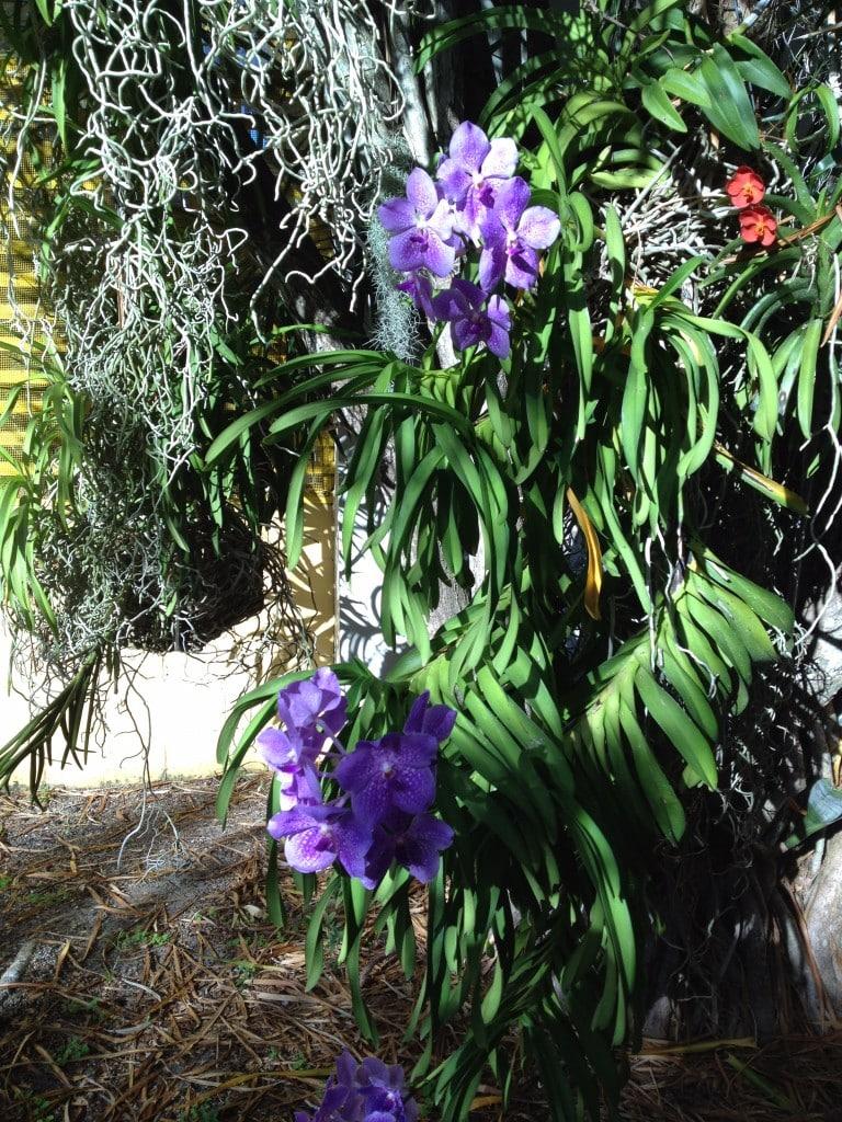 Bonnet House Museum and Gardens - Carmen Edelson - Luxury Travel Blogger
