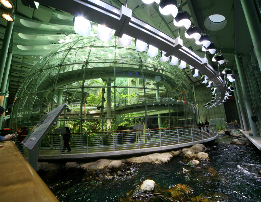 California Academy of Sciences, Golden Gate Park, San Francisco