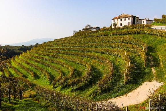 Italian Vineyards Prosecco di Valdobbiadene wine region in North Italy (Flickr: Fabrizio Malisan)