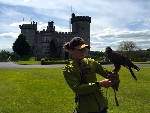 Falconry at Dromoland Castle
