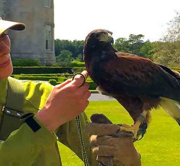 Dromoland Castle's Hawk Walks at The School of Falconry