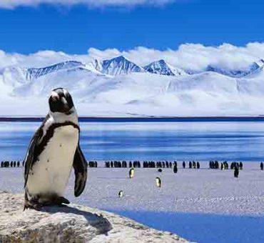 Luxury Cruises to Antarctica