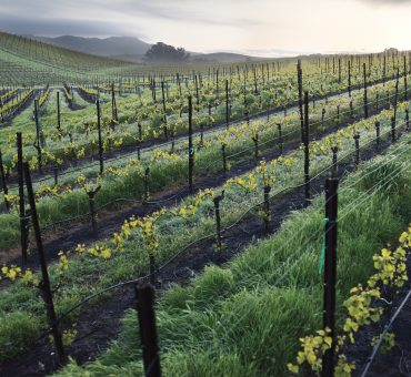Trinchero Napa Valley: Vines Interwined With Family Legacy