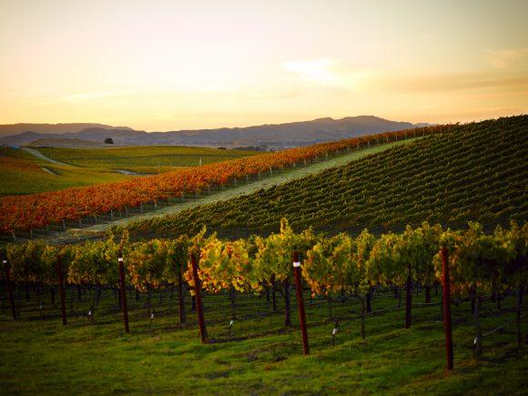 Photo by Trinchero Napa Valley - Vista Montone Vineyard