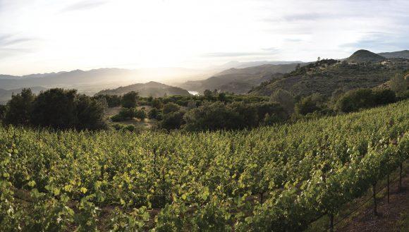 Photo by Trinchero Napa Valley - Haystack Vineyard