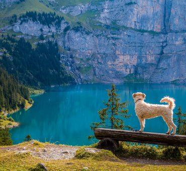 The 10 Most Convenient Collapsible Pet Travel Bowls
