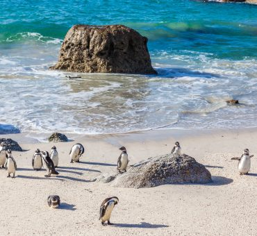 What To See in South Africa - Highlights of Cape Town