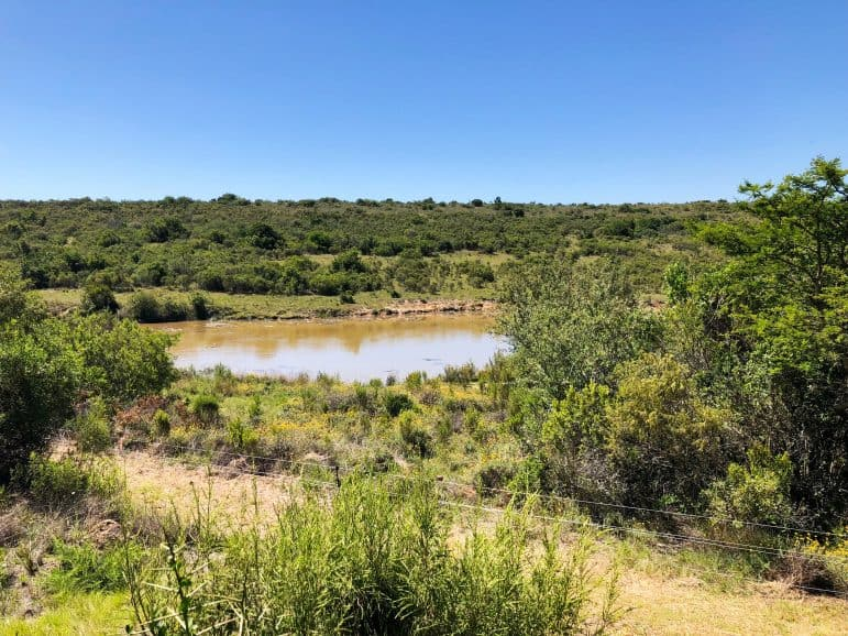 Kichaka Luxury Game Reserve Plung Pool