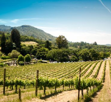 8 Things To Do When Visiting California Wine Country