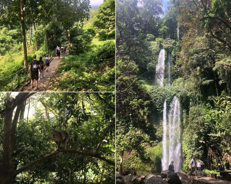 Walking Path, Wild Monkey at Sendang Gile and Tiu Kelep Waterfall Lombok